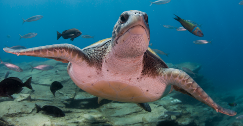 An Ancient Turtle Shell Was Found in Venezuela and It Belongs to the Largest Turtle Who Ever Lived