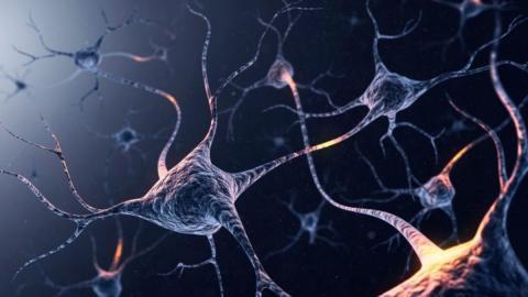 This Video Explains How Our Brains Destroy Dead Neurons