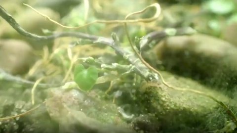 Here's What Happens When You Leave Bugs in a Terrarium for More Than 12 Years