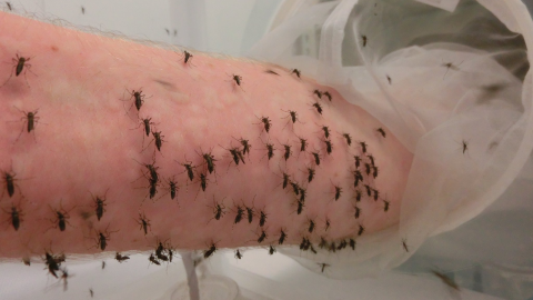 Australian man lets himself get bitten by thousands of mosquitoes all in the name of science