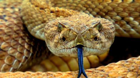 Study suggests humans could become venomous