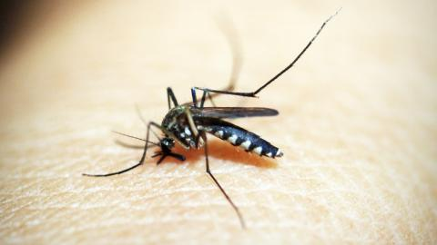 Mosquito bite: Scientists are trying to make humans invisible to mosquitoes