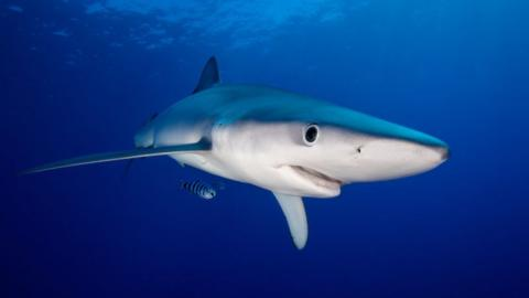 Are Sharks Something We Should Be Afraid Of?