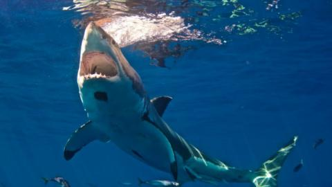 Check Out This Incredible Footage of a Hammerhead Shark Stealing a Fisherman's Catch