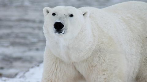 Hotel with 2 polar bears held captive in horrendous conditions causes outrage