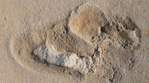 Oldest footprints of pre-humans discovered in Crete