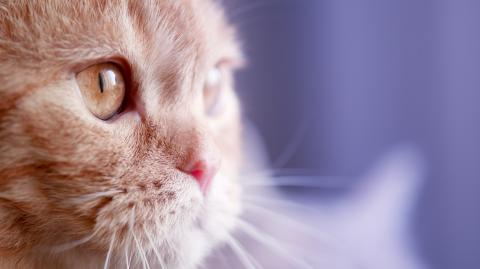 Sudanese plane pilot attacked by cat, forced to land