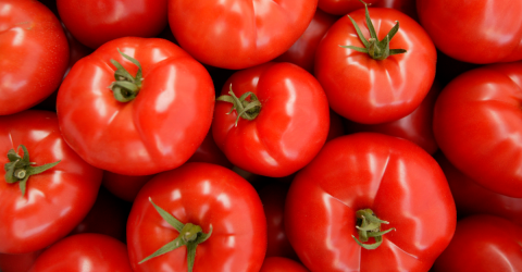 Here's How You Can Grow Tomatoes Using Something Found In Almost Every Kitchen