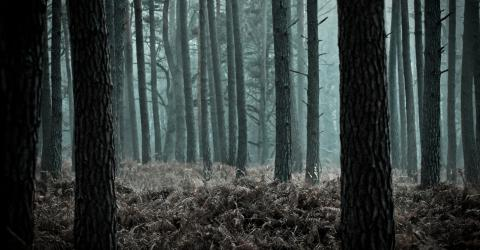 These are creepiest sounds you will ever hear