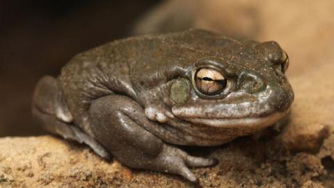 A Porn Star Was Arrested in Connection to the Death of a Man During a Ceremony That Involved Toad Poison