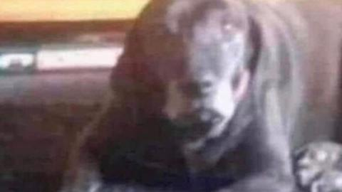 Do You See a Dog Or an Evil Clown? This Optical Illusion Will Drive You Crazy