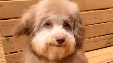 Meet Nori: The Dog With Some Impressive Human-Like Features!