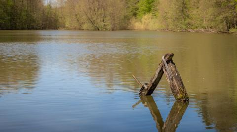 The mystery of the lock ness monster has finally been solved