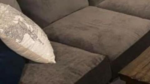 This Woman Bought a Used Sofa and Found Something Living Inside