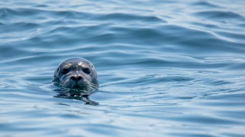 Watch: Bizarre moment a seal slapped a kayaker with an octopus