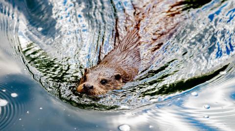 Enraged beaver mauls and almost kills elderly man in freak rabid attack