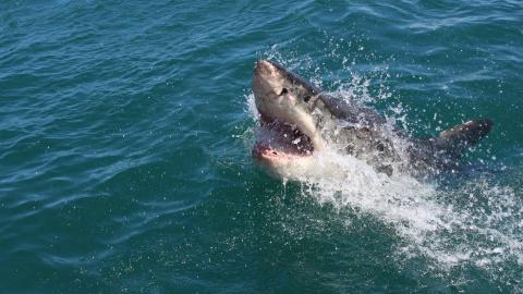 Man caught on camera wrestling shark with his bare hands
