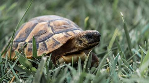Runaway tortoise that was lost for a year found just half a mile from it's home